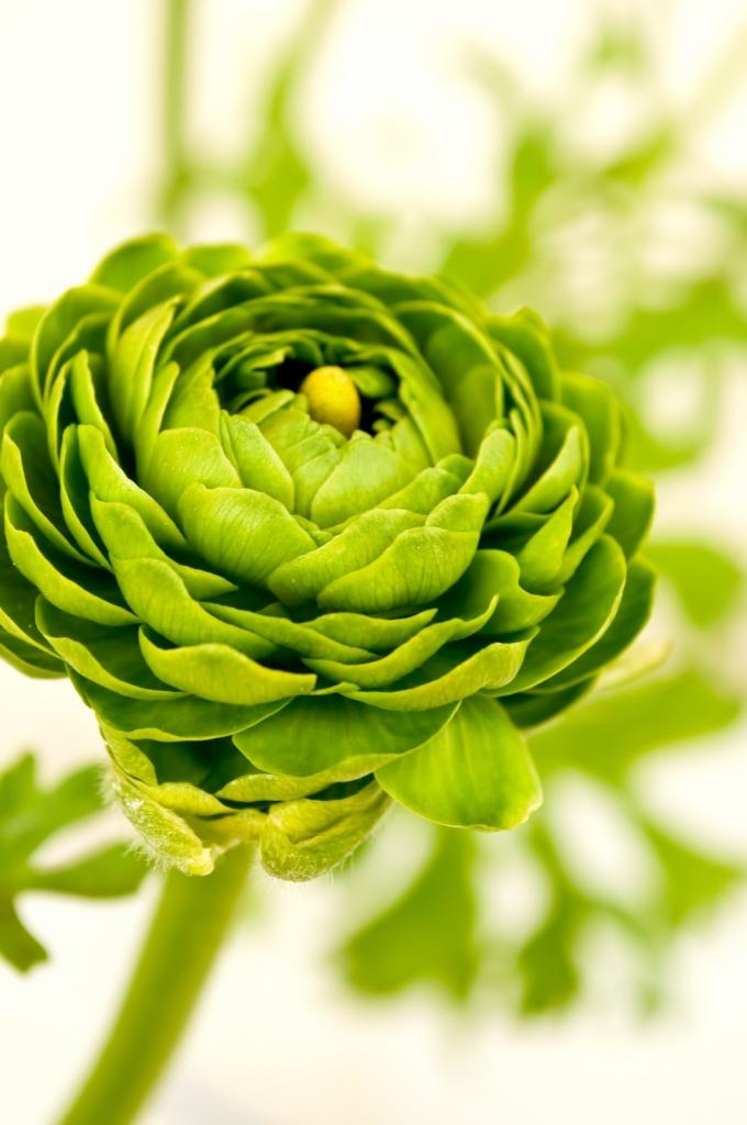 PPW_greennoranakyurasu-thumb-autox1600-13913